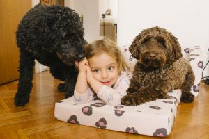 The Furry Family Members | Dog, Cat, Pet Family Photography Melbourne